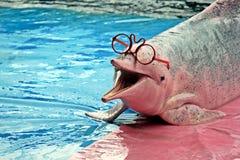 Αστεία γυαλιά δελφινιών τόσο χαριτωμένα Στοκ φωτογραφία με δικαίωμα ελεύθερης χρήσης