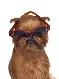 αστεία γυαλιά σκυλιών Στοκ φωτογραφίες με δικαίωμα ελεύθερης χρήσης