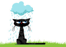 Αστεία δυστυχισμένη γάτα Διανυσματική απεικόνιση
