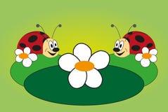 αστεία εικόνα δύο ladybug Στοκ εικόνα με δικαίωμα ελεύθερης χρήσης