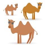 Αστεία καμήλα στο άσπρο υπόβαθρο Στοκ Φωτογραφίες