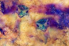 Αστεία κεφάλια στρουθοκαμήλων ΟΝΕ στο γραφικό δομημένο υπόβαθρο Στοκ Φωτογραφίες
