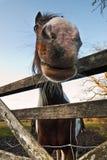 Αστεία κινηματογράφηση σε πρώτο πλάνο αλόγων Στοκ Εικόνες