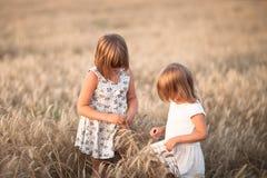 Αστεία κορίτσια που παίζουν με τη σίκαλη στο ηλιοβασίλεμα, τρόπος ζωής στοκ φωτογραφίες με δικαίωμα ελεύθερης χρήσης