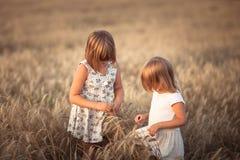 Αστεία κορίτσια που παίζουν με τη σίκαλη στο ηλιοβασίλεμα, τρόπος ζωής στοκ εικόνες