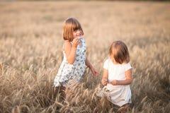 Αστεία κορίτσια που παίζουν με τη σίκαλη στο ηλιοβασίλεμα, τρόπος ζωής στοκ εικόνα