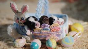 Αστεία κουτάβια σε ένα καλάθι με ένα διακοσμητικό κουνέλι, δίπλα στα αυγά Πάσχας Προετοιμασία για Πάσχα και τα αγαπημένα κατοικίδ απόθεμα βίντεο