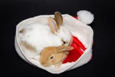 Αστεία κουτάβια στο καπέλο santa Στοκ εικόνα με δικαίωμα ελεύθερης χρήσης