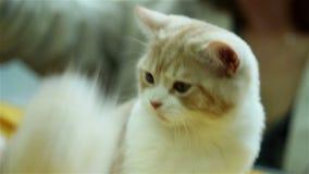 Αστεία κυνήγια γατακιών για την ουρά φιλμ μικρού μήκους