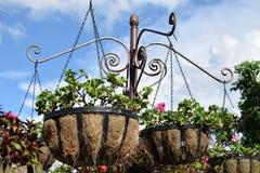 Αστεία λουλούδια στο δοχείο Στοκ Εικόνα
