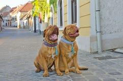 αστεία οδός σκυλιών Στοκ φωτογραφίες με δικαίωμα ελεύθερης χρήσης
