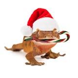 Αστεία σαύρα που τρώει τον κάλαμο καραμελών Χριστουγέννων Στοκ Φωτογραφίες