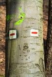 Αστεία σημάδια στο ξύλο με ένα πρόσωπο Στοκ Εικόνα