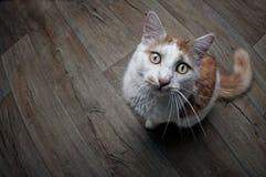 Αστεία τιγρέ γάτα που εξετάζει επάνω τη κάμερα Στοκ εικόνες με δικαίωμα ελεύθερης χρήσης