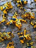 Αστείοι κίτρινοι βάτραχοι Στοκ εικόνες με δικαίωμα ελεύθερης χρήσης