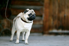 Αστείος λίγο γκρίζο σκυλί μαλαγμένου πηλού Στοκ Εικόνα