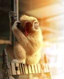 Αστείος γούνινος πίθηκος στοκ εικόνες με δικαίωμα ελεύθερης χρήσης