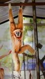 Αστείος γούνινος πίθηκος στοκ φωτογραφίες