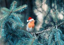 Αστείος λίγο πουλί Robin στην κόκκινη ΚΑΠ συνεδρίαση Χριστουγέννων στο πίτουρο στοκ φωτογραφίες