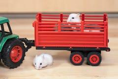 Αστείος μικρός γύρος χάμστερ στο τρακτέρ παιχνιδιών Άσπρες χάμστερ στο κόκκινο ρυμουλκό Στοκ Φωτογραφία