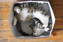 Αστείος ριγωτός ύπνος γατών σε ένα κιβώτιο στο πάτωμα στοκ φωτογραφία με δικαίωμα ελεύθερης χρήσης