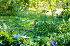 Αστείος σκίουρος στο πάρκο στο Λονδίνο Στοκ εικόνα με δικαίωμα ελεύθερης χρήσης