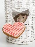 Αστείος φανταχτερός αρουραίος προσώπου με ένα μπισκότο μορφής καρδιών Στοκ εικόνα με δικαίωμα ελεύθερης χρήσης