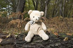 Αστείος teddy αφορά τον ξύλινο φλοιό Στοκ εικόνα με δικαίωμα ελεύθερης χρήσης