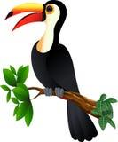 αστείος toucan πουλιών Στοκ Φωτογραφίες