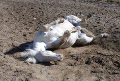αστείο άλογο Στοκ εικόνα με δικαίωμα ελεύθερης χρήσης