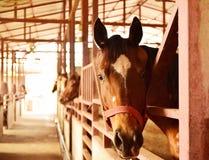 αστείο άλογο Στοκ Φωτογραφίες