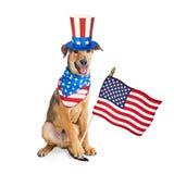 Αστείο αμερικανικό πατριωτικό σκυλί με τη σημαία Στοκ φωτογραφίες με δικαίωμα ελεύθερης χρήσης