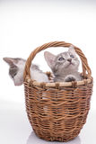 αστείο απομονωμένο γατάκι λίγα άσπρα Στοκ Φωτογραφία