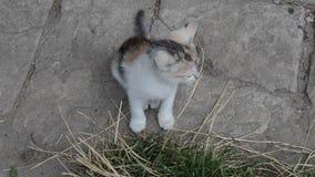 Αστείο γατάκι παιχνιδιού απόθεμα βίντεο