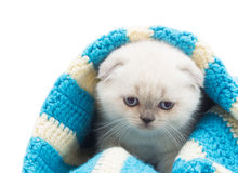 αστείο γατάκι Στοκ Φωτογραφίες