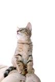 αστείο γατάκι Στοκ εικόνα με δικαίωμα ελεύθερης χρήσης