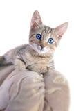 αστείο γατάκι Στοκ φωτογραφία με δικαίωμα ελεύθερης χρήσης