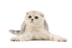 αστείο γατάκι στοκ φωτογραφίες με δικαίωμα ελεύθερης χρήσης