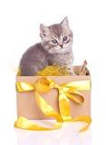 Αστείο γούνινο γκρίζο γατάκι σε ένα σύνολο κιβωτίων Στοκ φωτογραφία με δικαίωμα ελεύθερης χρήσης