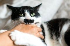 Αστείο γραπτό γατάκι με το χέρι κοριτσιών δαγκωμάτων συγκινήσεων και γρατσουνιές στα μοντέρνα φύλλα Χαριτωμένη γάτα με το δάγκωμα στοκ εικόνες