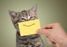 Αστείο ευτυχές νέο πορτρέτο γατών με το χαμόγελο στο χαρτόνι στοκ φωτογραφία
