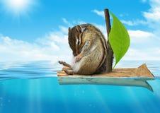 Αστείο ζώο, chipmunk επιπλέοντας εν πλω, έννοια ταξιδιών Στοκ Εικόνες