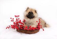 Αστείο κουτάβι στο στεφάνι με τα κόκκινα μούρα Στοκ Εικόνες
