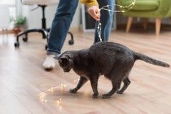 Αστείο παιχνίδι γατών με τη γιρλάντα Ρωσική μπλε γάτα με τα φω'τα Χριστουγέννων, εκλεκτική εστίαση Στοκ εικόνες με δικαίωμα ελεύθερης χρήσης