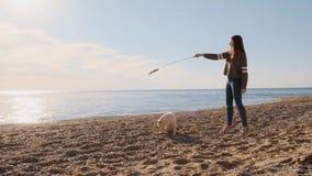 Αστείο παιχνίδι κουταβιών inu shiba με ένα ραβδί στην παραλία με τον ανθρώπινο φίλο του σε αργή κίνηση απόθεμα βίντεο