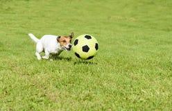 Αστείο παιχνίδι ποδοσφαιριστών με μια σφαίρα ποδοσφαίρου στην πίσω αυλή στοκ εικόνες