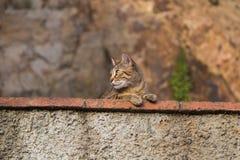 Αστείο παρατηρηθε'ν γάτα περιβάλλον από έναν τοίχο πετρών Στοκ εικόνες με δικαίωμα ελεύθερης χρήσης