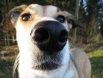 Αστείο πορτρέτο ενός σκυλιού (1) Στοκ φωτογραφίες με δικαίωμα ελεύθερης χρήσης