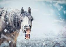 Αστείο πρόσωπο αλόγων χαμόγελου στο υπόβαθρο χειμερινής φύσης με την πτώση χιονιού στοκ φωτογραφία με δικαίωμα ελεύθερης χρήσης