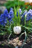 Αστείο ρύγχος eggshell και της χλόης στοκ φωτογραφίες με δικαίωμα ελεύθερης χρήσης